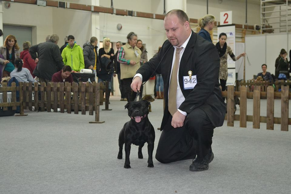 2014 Summary - DOMIDAR DOGS Kennel