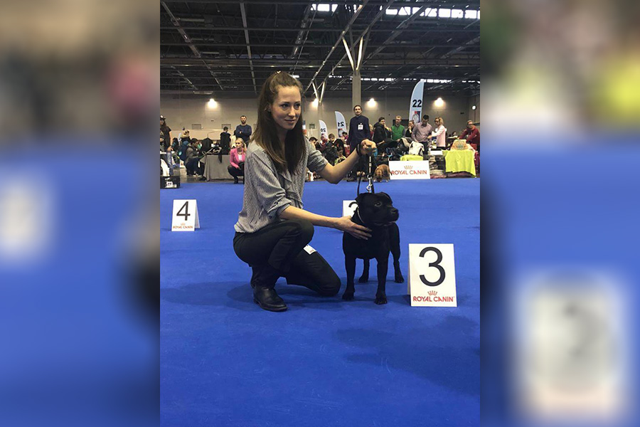 2019 Summary - DOMIDAR DOGS Kennel