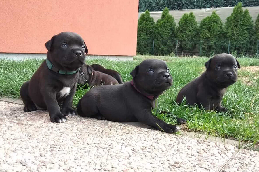 Puppies from Domidar Dogs Kennel